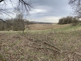 *Morgan Co. Absolute Auction* 100 Acre Recreational Property & Building Sites featured photo 6