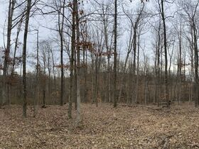 *Morgan Co. Absolute Auction* 100 Acre Recreational Property & Building Sites featured photo 7