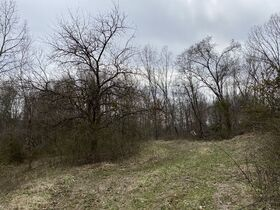 *Morgan Co. Absolute Auction* 100 Acre Recreational Property & Building Sites featured photo 8