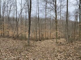*Morgan Co. Absolute Auction* 100 Acre Recreational Property & Building Sites featured photo 9