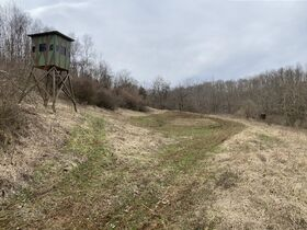 *Morgan Co. Absolute Auction* 100 Acre Recreational Property & Building Sites featured photo 2