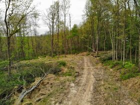 Stoney Hill Road Online Only Land Auction featured photo 7
