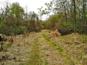Stoney Hill Road Online Only Land Auction featured photo 8