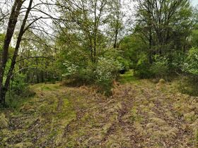 Stoney Hill Road Online Only Land Auction featured photo 9