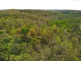 Stoney Hill Road Online Only Land Auction featured photo 10
