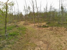 Stoney Hill Road Online Only Land Auction featured photo 11