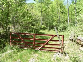 23 Acre Taylor County Land featured photo 3