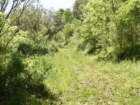 23 Acre Taylor County Land featured photo 4