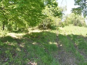 23 Acre Taylor County Land featured photo 7