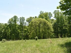 23 Acre Taylor County Land featured photo 8