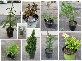 Nursery Stock Plants, and Trees Closing May 27th featured photo 1