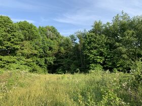Prime Tract of Wooded Acreage-Coshocton County featured photo 1