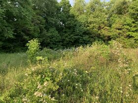 Prime Tract of Wooded Acreage-Coshocton County featured photo 2