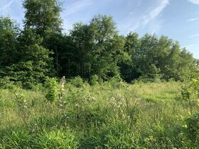 Prime Tract of Wooded Acreage-Coshocton County featured photo 3