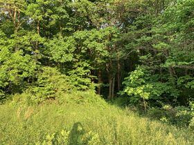 Prime Tract of Wooded Acreage-Coshocton County featured photo 4