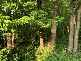 Prime Tract of Wooded Acreage-Coshocton County featured photo 5