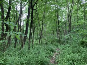 Prime Tract of Wooded Acreage-Coshocton County featured photo 6