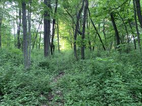 Prime Tract of Wooded Acreage-Coshocton County featured photo 7