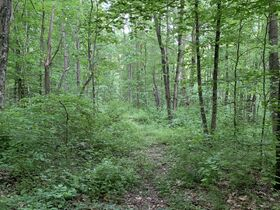 Prime Tract of Wooded Acreage-Coshocton County featured photo 8