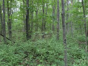 Prime Tract of Wooded Acreage-Coshocton County featured photo 9
