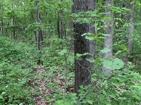 Prime Tract of Wooded Acreage-Coshocton County featured photo 11
