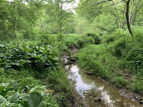 Prime Tract of Wooded Acreage-Coshocton County featured photo 12