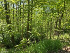Absolute 2 Acres Braxton County Land featured photo 2
