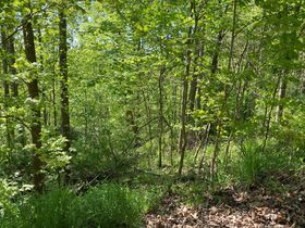 Absolute 2 Acres Braxton County Land featured photo 4