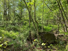 Absolute 2 Acres Braxton County Land featured photo 5