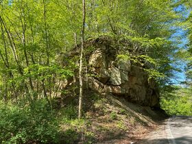 Absolute 2 Acres Braxton County Land featured photo 6