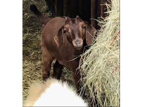 Parker County Impounded Livestock featured photo 3