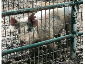 Parker County Impounded Livestock featured photo 5