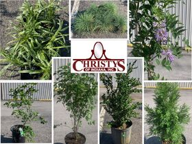 Nursery Stock Plants, and Trees Closing June 8th featured photo 1