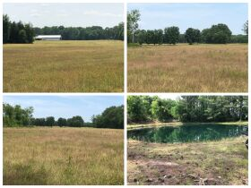160+/- Acres of Farmland - Lawrence County, AL  - Offered in TWO TRACTS approximately 80 acres each featured photo 1