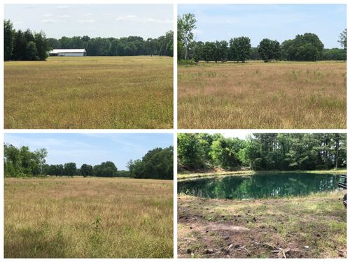 160+/- Acres of Farmland - Lawrence County, AL  - Offered in TWO TRACTS approximately 80 acres each featured photo