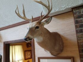 Ultimate Man Cave Decor And More Estate featured photo 9