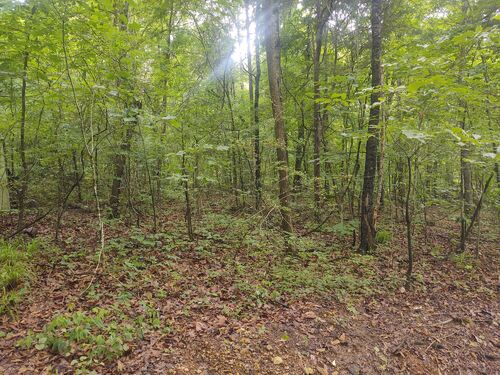 Wooded Lot In Elk Estates (Elk River Access) featured photo