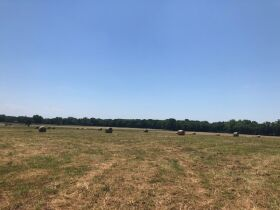 HIGHLY PRODUCTIVE GRASS FARM-SOUTH COFFEYVILLE AREA-NOWATA COUNTY, OK LAND AUCTION - 220+/- acres SOLD AS 1 UNIT featured photo 3