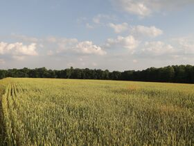 Tremendous Offering of 33 Acres In Wayne County featured photo 4