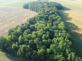 Tremendous Offering of 33 Acres In Wayne County featured photo 3