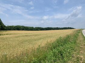 Tremendous Offering of 33 Acres In Wayne County featured photo 2
