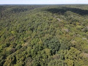 269 +/- Acres, 19 +/- Acres and Timber to be sold at Absolute Auction featured photo 10