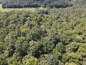 269 +/- Acres, 19 +/- Acres and Timber to be sold at Absolute Auction featured photo 11