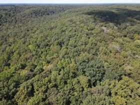 269 +/- Acres, 19 +/- Acres and Timber to be sold at Absolute Auction featured photo 12