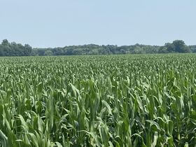 Chamberlain Family Estate - 222 Acres of Shelby County Farmland featured photo 9