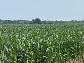Chamberlain Family Estate - 222 Acres of Shelby County Farmland featured photo 10