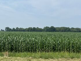Chamberlain Family Estate - 222 Acres of Shelby County Farmland featured photo 11