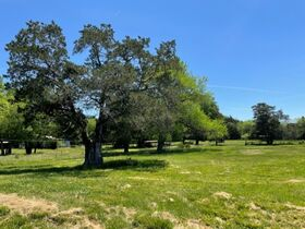 House, Barns & Outbuildings on 25+/- Acres Offered in 3 Tracts - Auction July 31st featured photo 7