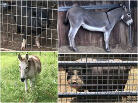 Parker County Impounded Livestock Auction - Online Only featured photo 1