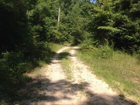 Online Only 360 acres adjoining the Big South Fork National Park in 6 tracts from 16 ac to 91 ac each featured photo 6